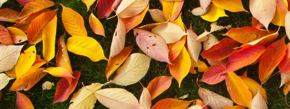 Kunstgras in de herfst en winter onderhouden