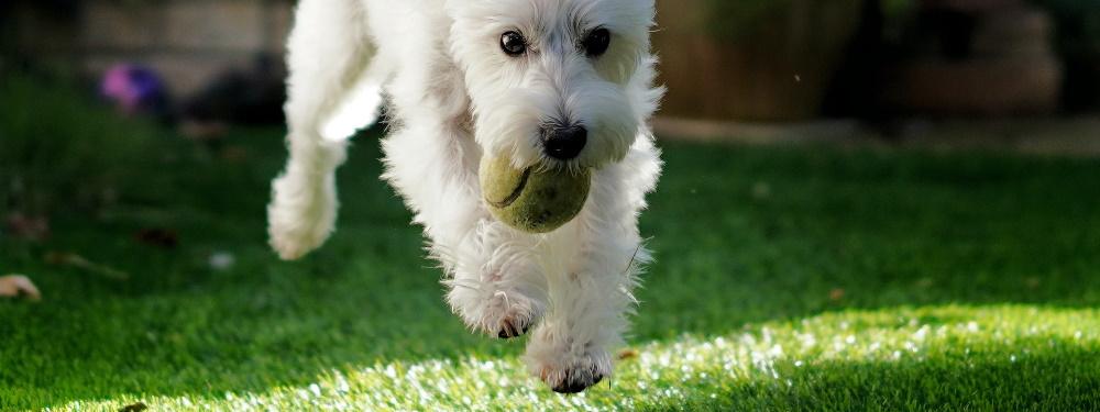 Is kunstgras geschikt voor honden?
